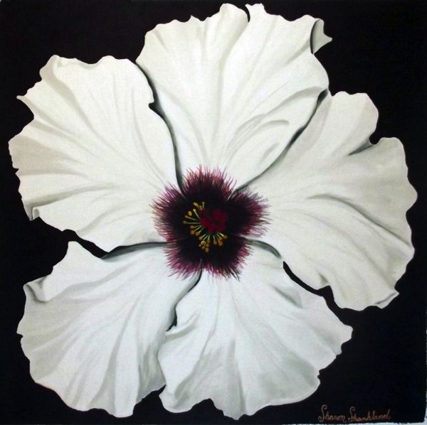 Sharon A Shankland- White Hibiscus