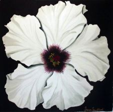 Sharon A Shankland, White Hibiscus